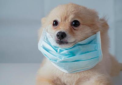Coronavirus en Perú: Cómo cuidar a tu mascota