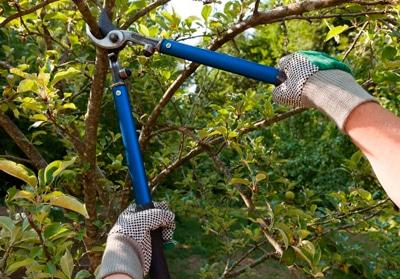 Recorta los arbustos grandes - Cuidar tu casa
